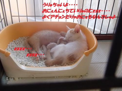 PA140257_convert_20151016144828.jpg