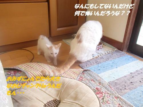 PA170288_convert_20151017143506.jpg
