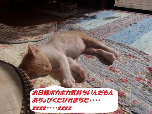 PA210330_convert_20151024131621.jpg