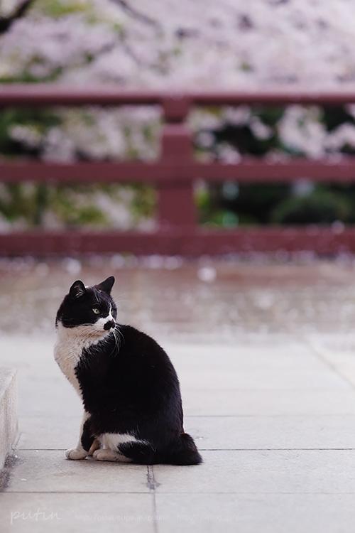 putin_owner_nekoyuhi16420851336.jpg