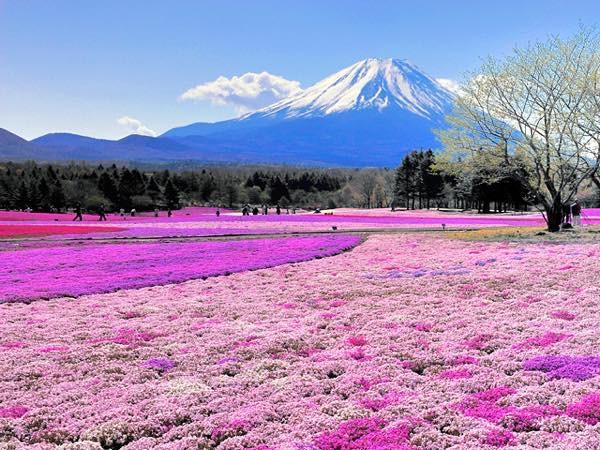 20160324 桜