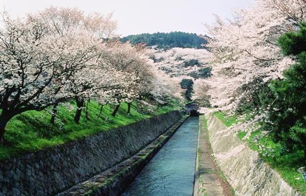 20160331 琵琶湖疏水