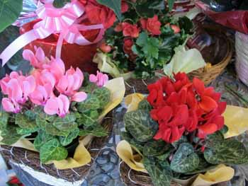 20151203_道の駅クリスマスの花々2