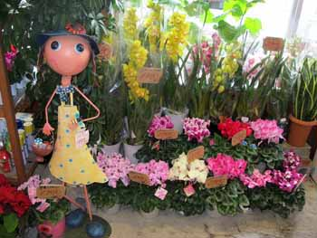 20151203_道の駅クリスマスの花々4