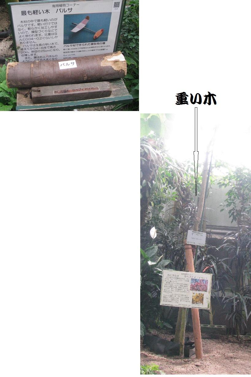 IMG_0453重い木軽い木