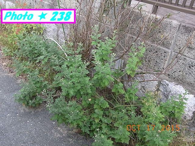 幹端の野菊