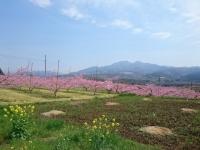 桃と茅ヶ岳