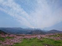 桃と鳳凰三山