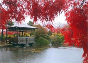 秋雨の日本庭園