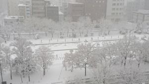 20151124雪景色