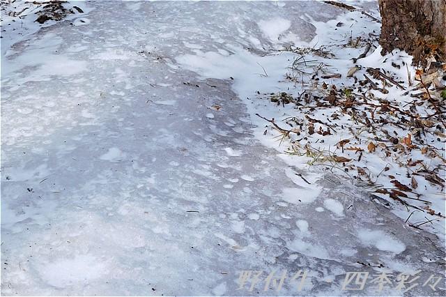 s-N-095705-0.jpg