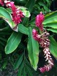 ハワイ赤い花