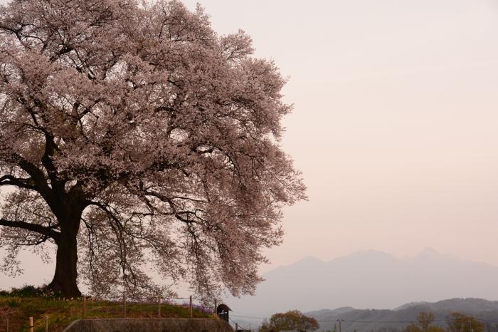 わに塚0410_桜と八ヶ岳