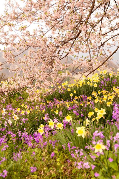 わに塚0410_きれいなお花と枝先