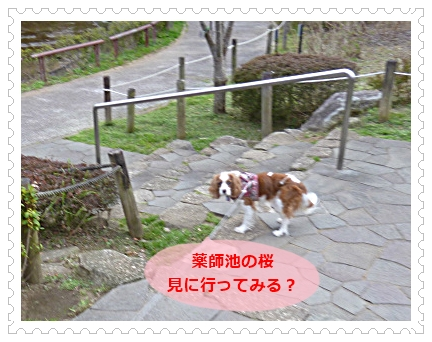 2016032603.jpg