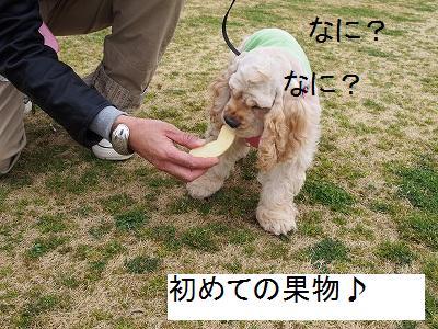 s-りんご