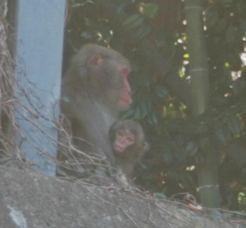 赤ちゃん猿