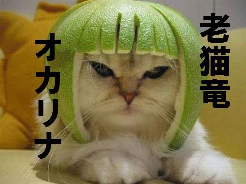 オカリナ猫