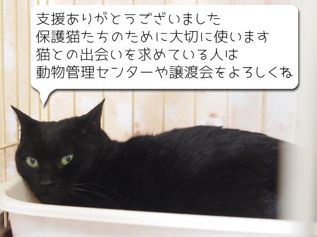 P3130381.jpg