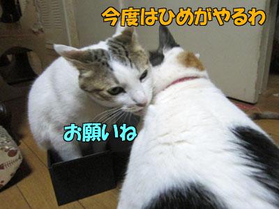 160331-06.jpg