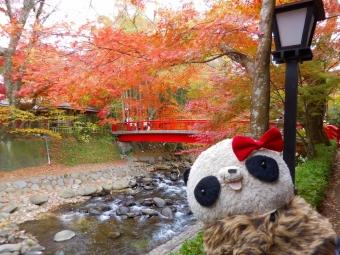 桂川の紅葉とおばぶ2015