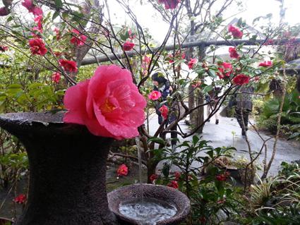 椿ガーデン