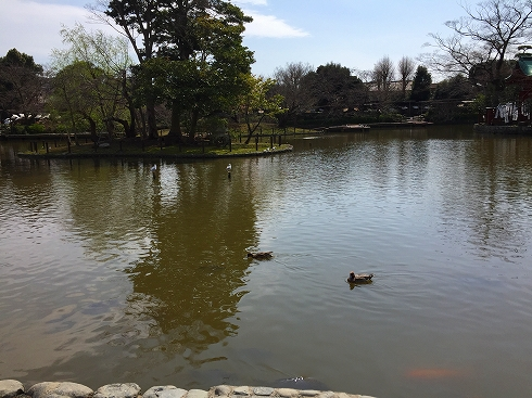 鶴岡八幡宮の池