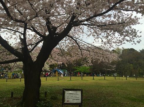 西郷山公園2