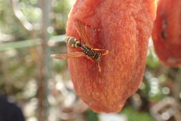PB110蜂と干し柿