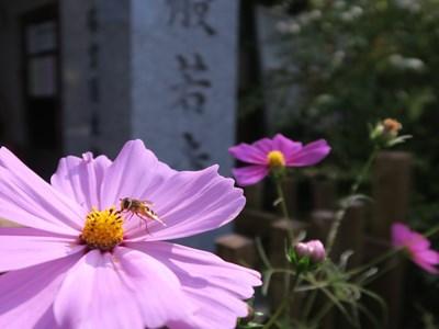 般若寺(コスモス寺) (2)