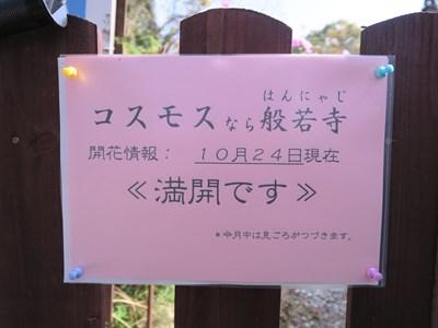 般若寺(コスモス寺) (5)