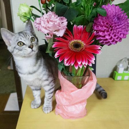 しおとお花