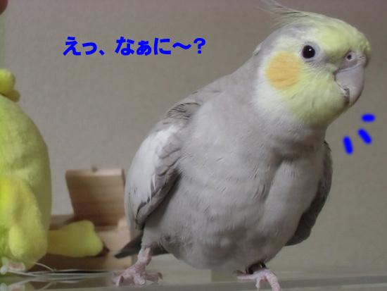 なぁに~?