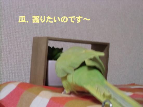 ダメだよ~\(◎o◎)/!