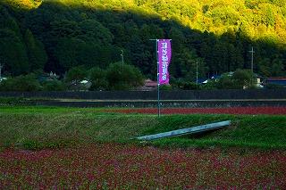 吉賀町「紅そば花見会」 - ははの独り言