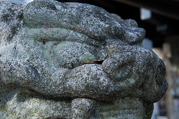 猿田彦神社狛犬