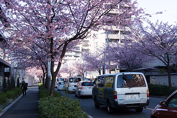 高岳の桜並木風景