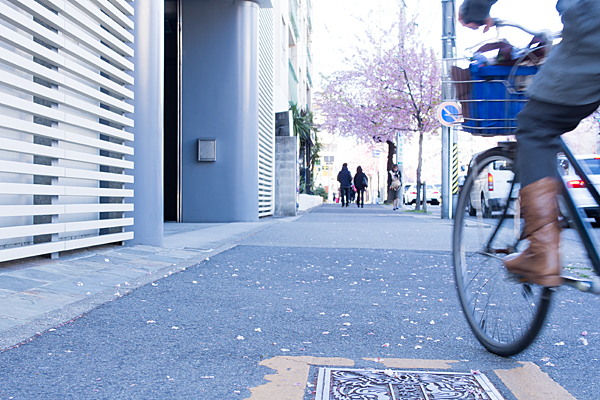 散り桜と自転車