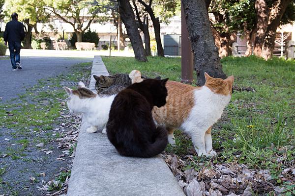 猫と散歩男性
