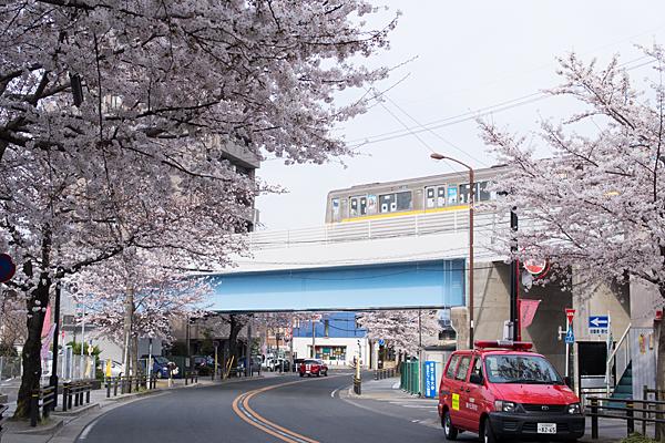 藤が丘駅付近桜並木