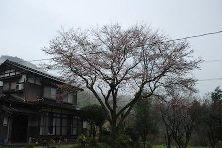 桜280331