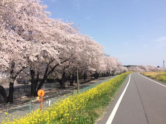 sakura_spot.jpg