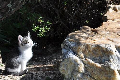 仔猫見上げる2
