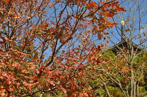 さるすべりの紅葉