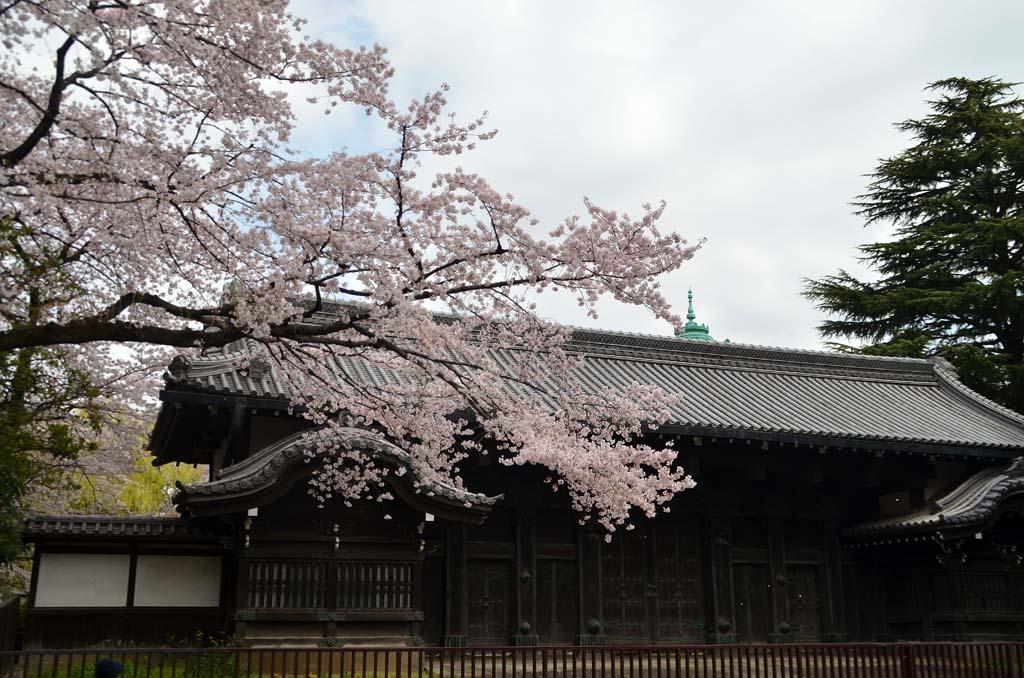 D70_8385上野の桜