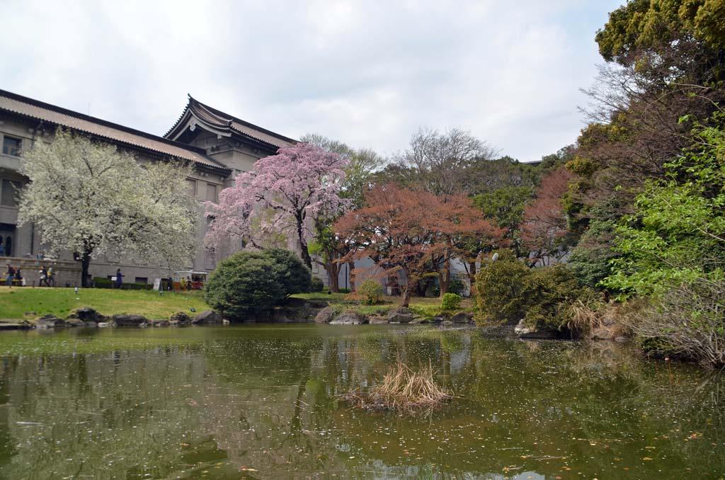 D70_8396上野の桜