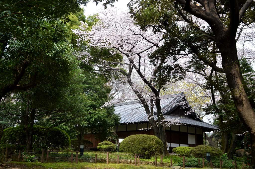 D70_8404上野の桜