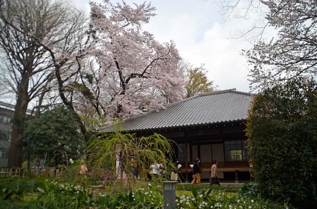 D70_8411上野の桜