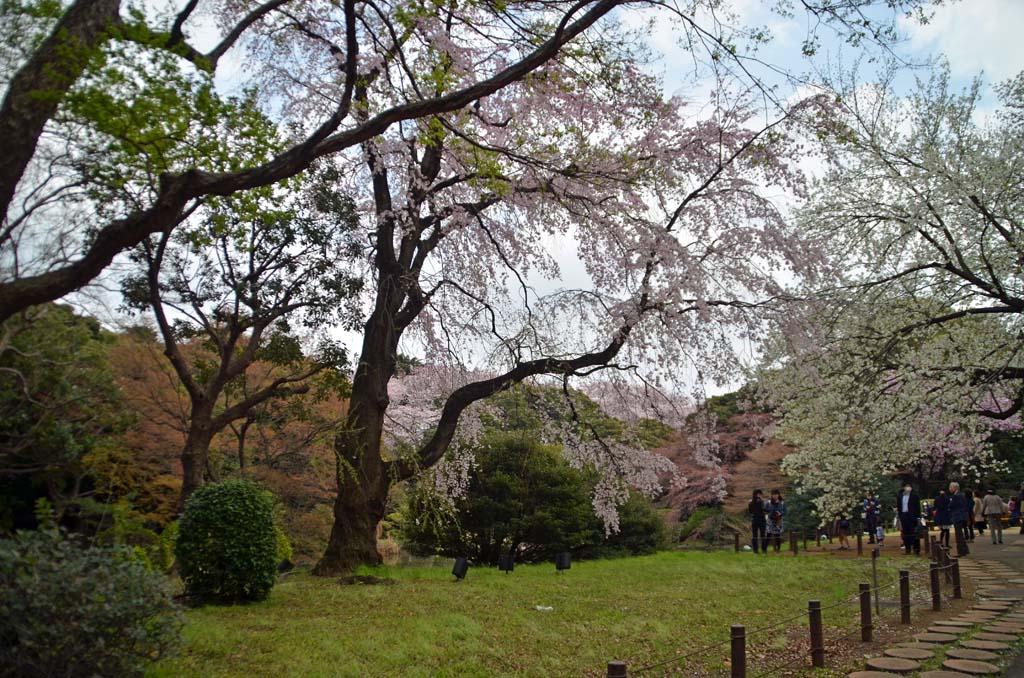 D70_8415上野の桜