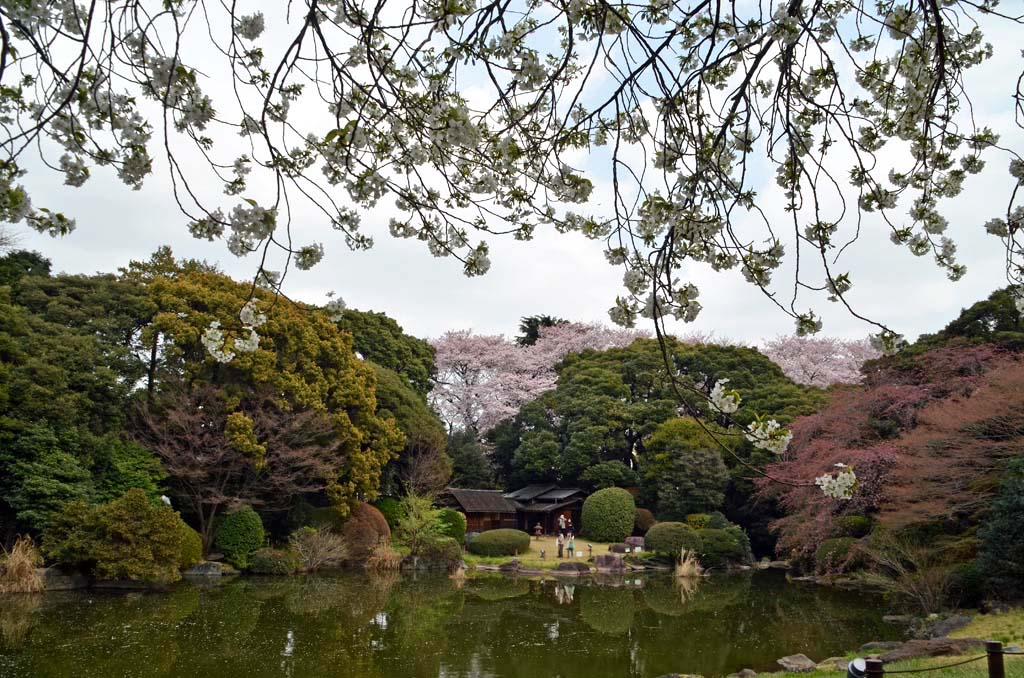 D70_8419上野の桜